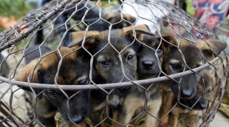 macellava cani
