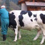 Etichetta di origine del latte obbligatoria | Sì al Made in Italy