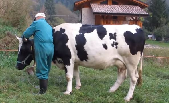 etichetta di origine del latte obbligatoria