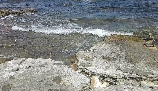 alga tossica ostreopsis ovata