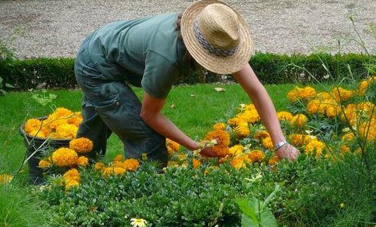 boom di startup da giardiniere