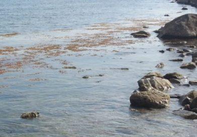 Alga tossica Puglia settembre 2017 | I risultati dei rilievi effettuati dall'Arpa