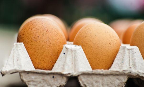 richiamo uova al fipronil cisam